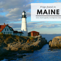 Maine Frogs and Toads
