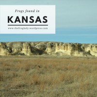 Kansas Frogs and Toads