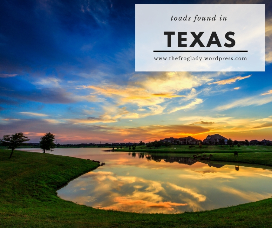 Texas Toads